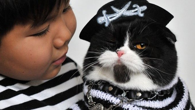 cat in pirate outfit