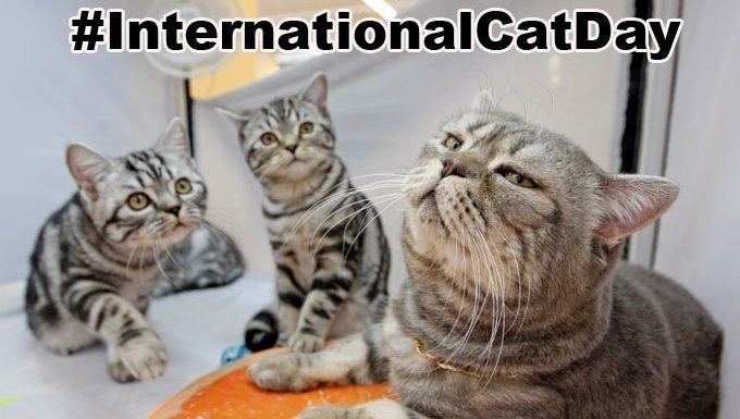 cats on international cat day