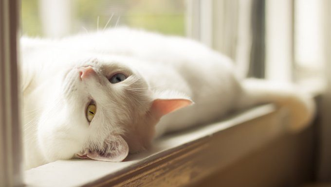white cat lying in the sun
