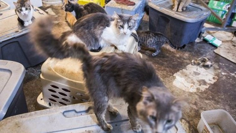 cats in dirty crates at the condemned home