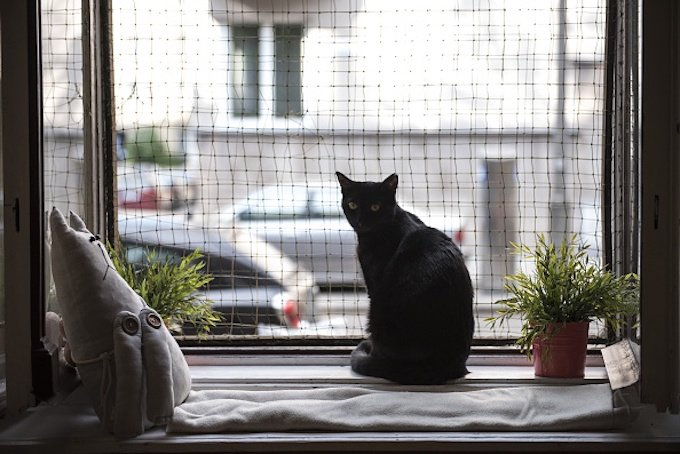 """KRAKOW, POLAND - MAY 04 :A black cat is seen at the Cat Caffee window, Krowoderska 48, Krakow, Poland on May 4, 2016. The Cat Coffee is an attraction for the cat lovers and it is open since the end of June 2015 and has six cats. Two of the cats came from the """" Kocia Academia"""" fondation and the other four cats were or found on the street. (Photo by Omar Marques/Anadolu Agency/Getty Images)"""
