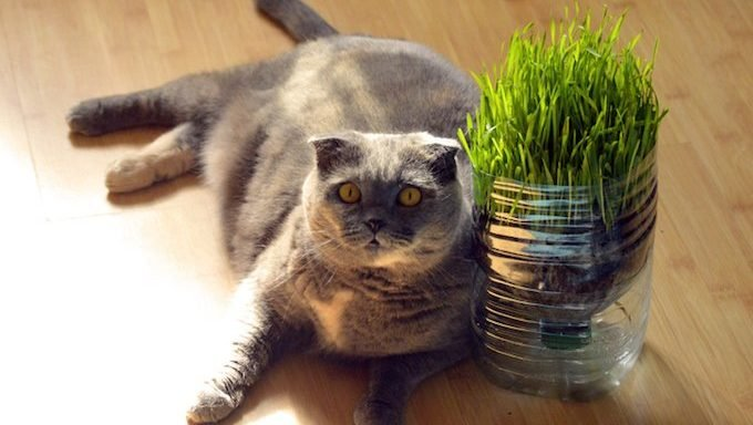 Fat cat sitting on the floor with grass