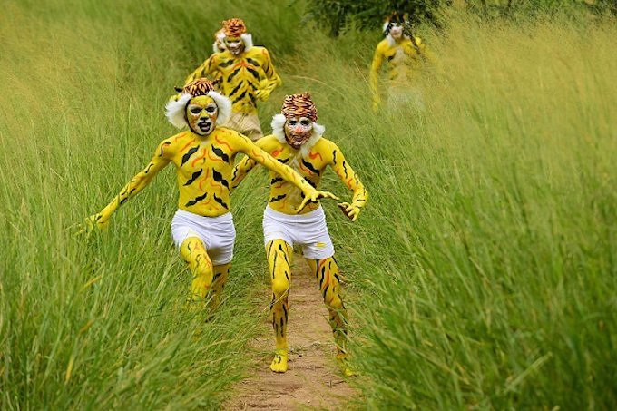 Indian schoolchildren, their face and bodies painted as tigers, run at a park in Bangalore on August 1, 2015, during an awarness programme about the endangered tiger species. International Tiger Day which came into being at the Saint Petersburg Tiger Summit in 2010, is held annually on July 29, to give worldwide attention to the reservation of tigers and it is both an awareness day and a celebration of tigers. AFP PHOTO/Manjunath KIRAN (Photo credit should read MANJUNATH KIRAN/AFP/Getty Images)