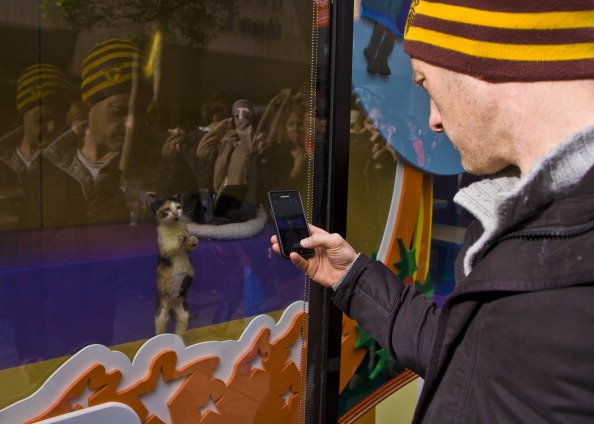 SAN FRANCISCO, CA - DECEMBER 22: A man takes a photo of a kitten in a Macy's window on December 22, 2012, in San Francisco, California. Despite cold and rainy weather, San Francisco is still a major attraction for tourists during the Christmas holidays. (Photo by George Rose/Getty Images)