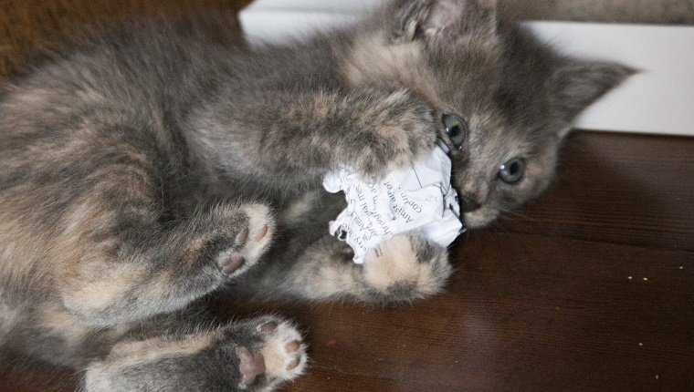 Kitten playing with ball of paper