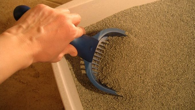 hand with small shovel scooping litter box