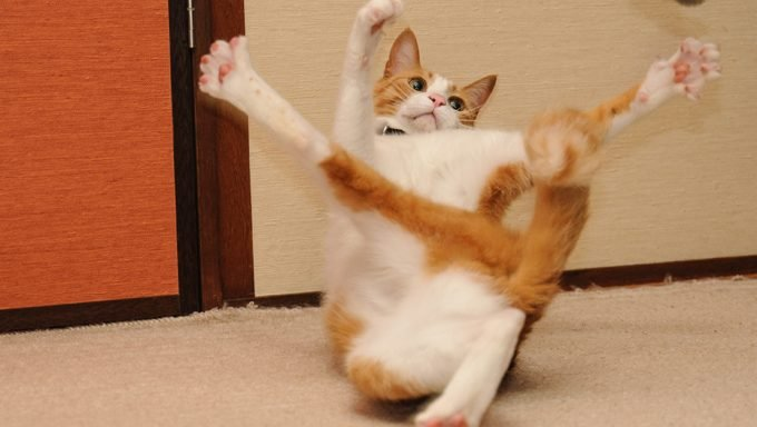 cat in an unusual, energetic position