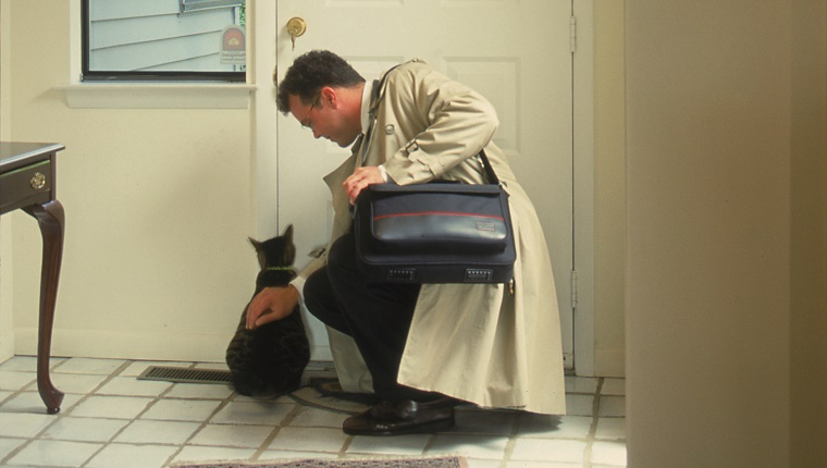 Businessman greeted by cat on arriving home