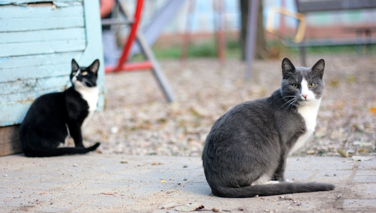"""Young female and male cats on the street. Horizontal colour photo, selective focus."""