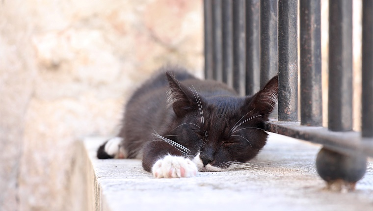 Stray black cat with white paws and whiskers sleeping outdoors