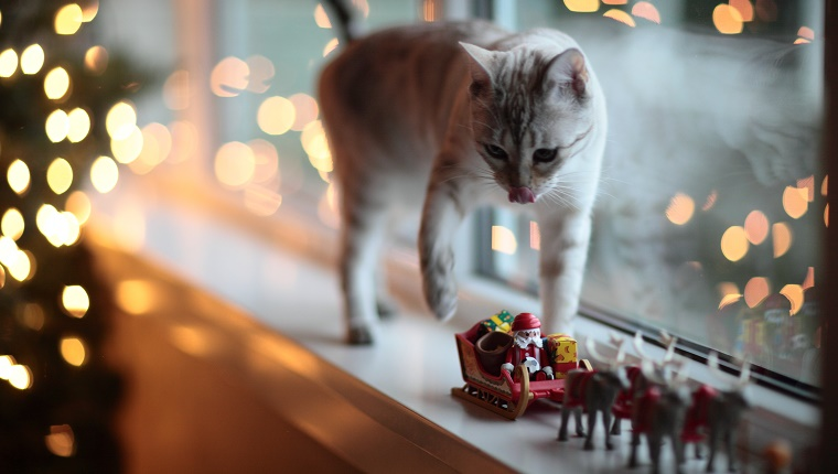 White cat on windowsill next to Christmas tree and toy Santa and sleigh.