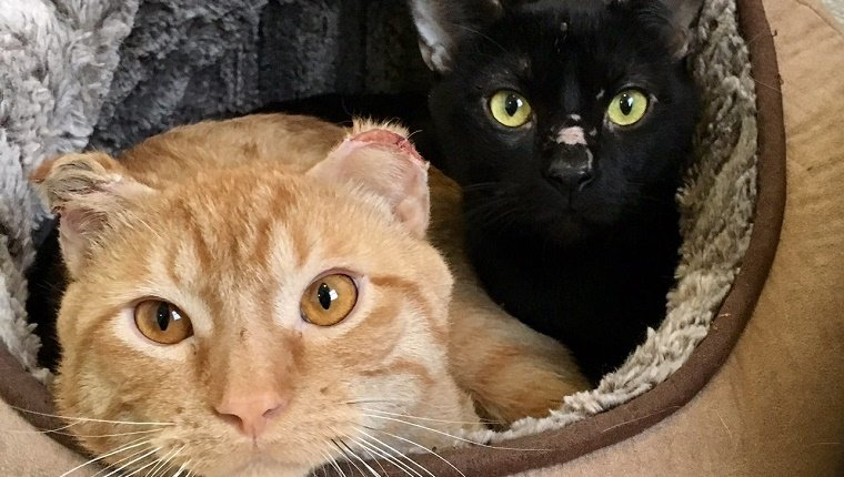 cat-brothers-frostbite-rescue-1