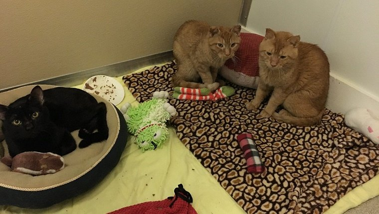 cat-brothers-frostbite-rescue-3