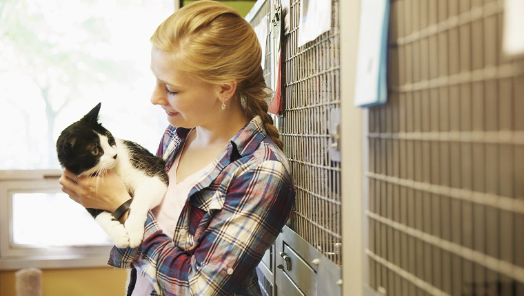 Female volunteer petting a cat in animal shelter