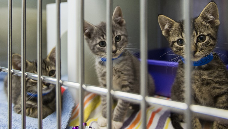Kittens sitting in cage at animal shelter