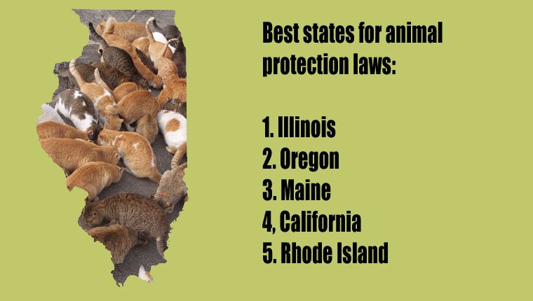 top-states-animal-protection-cats-2