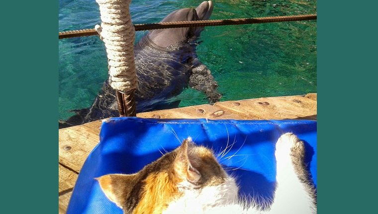Cat Looking At Dolphin At Seaside