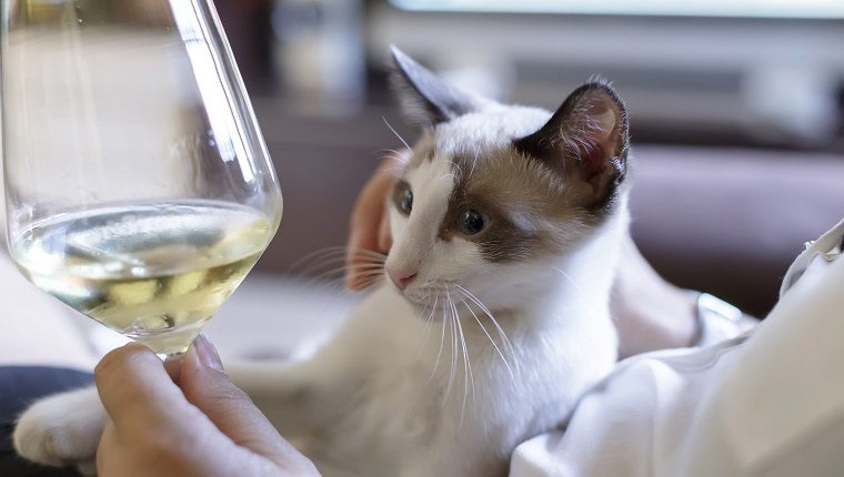 Woman with glass of white wine and cat on sofa in the room