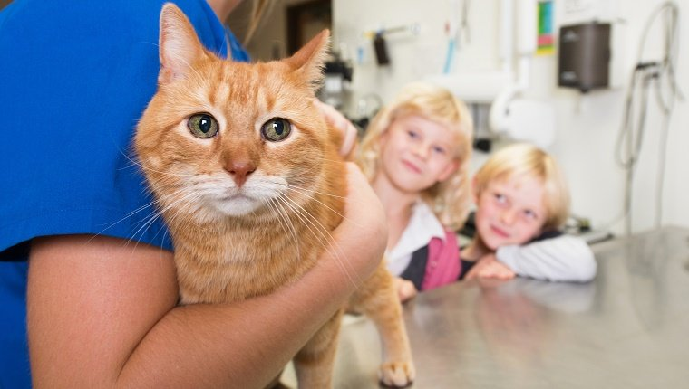 Veterinarian examining cat in vet's surgery. The pets owners - children eagerly watching.