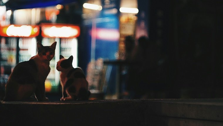 Cats Sitting On Retaining Wall At Night