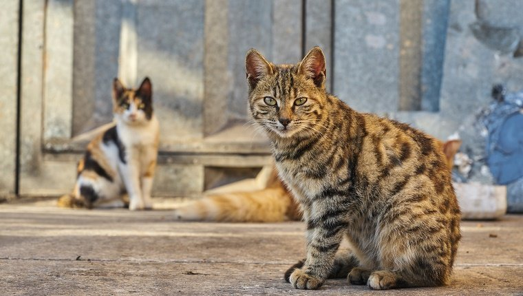 Stray Cats Looking At Camera