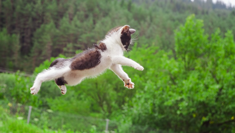 cute cat flying and jumping in the nature. closeup