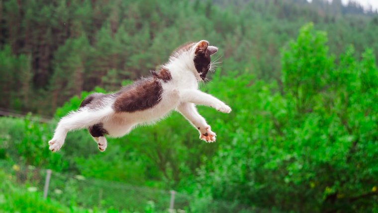 Fur Laughs: 7 Cats Who Tried To Make A Jump But Didn't Even Come Close  [VIDEOS] - CatTime