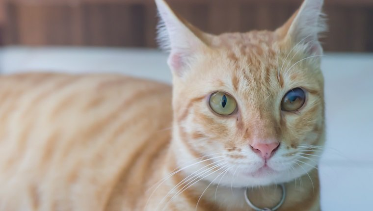 picture of cat that one of the cat eye is defective