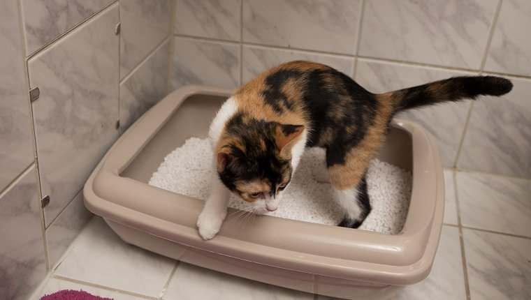 Get cats used to the litter box