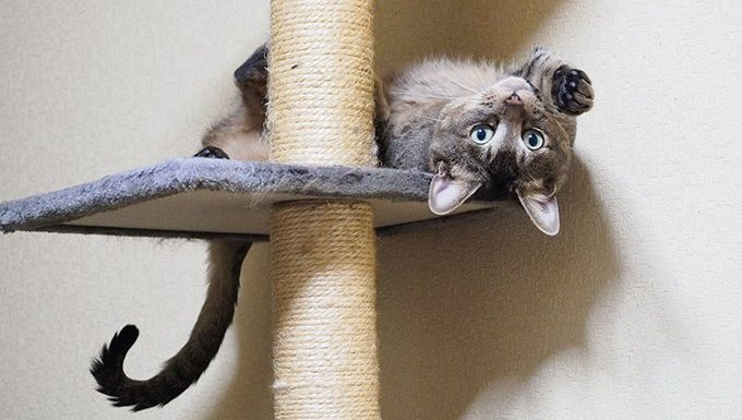 cat upside down on scratching post