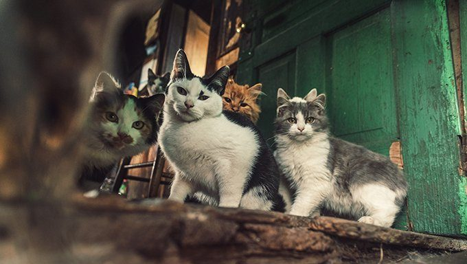 cats in hoarding situation