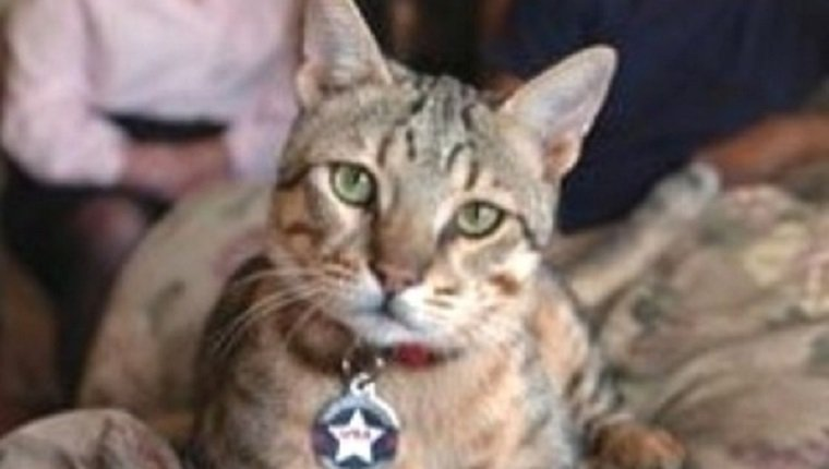 military-cats-3