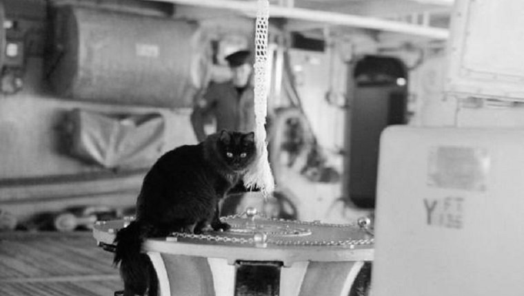 military-cats-5
