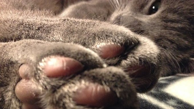 cat showing paws