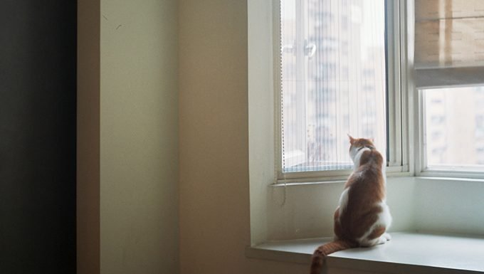cat sitting by window