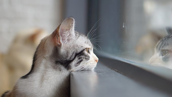 cat with head on window sill looking out