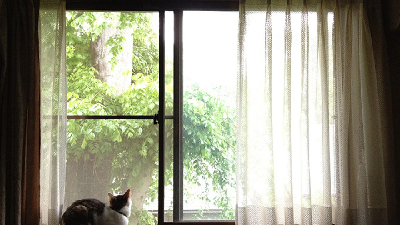 6 Ways To Keep Your Cat Safe From Falling Out Of Open Windows - CatTime