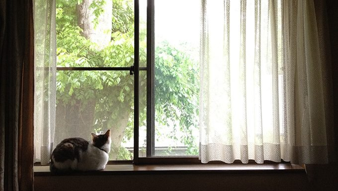 cat on window ledge looking out