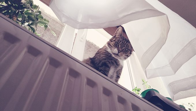below view of cat on window ledge