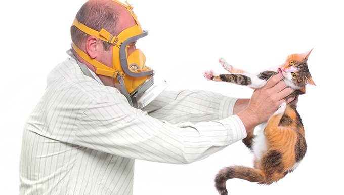 home spray for cat allergies