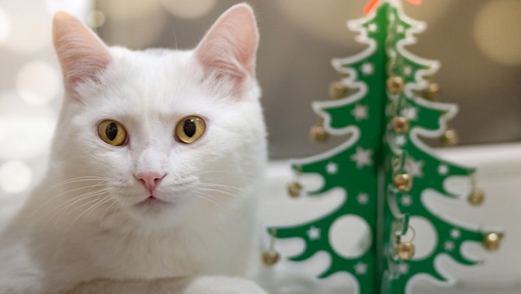 A white cat in anticipation of the holiday lies on a windowsill next to a wooden green Christmas tree