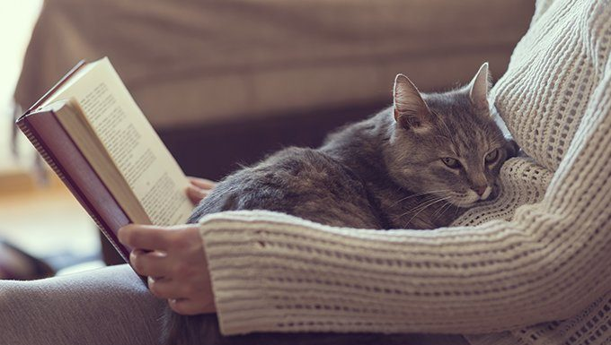 cat sitting on lap with book