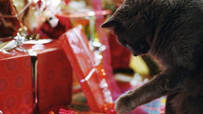 cat with gifts