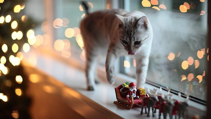 cat on christmas