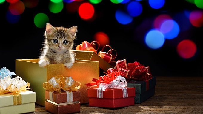 kitten in gift box