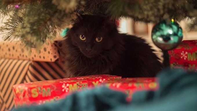 black kitten hiding under christmas tree