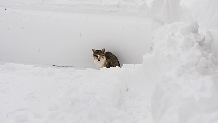 A cat sits in a pile of snow December 20, 2009 in New York. Just days before the December 25 holiday, the eastern seaboard from North Carolina to New England was digging out Sunday from the worst blizzard in years, which closed train and bus service, paralyzed air traffic and left hundreds of thousands of residents without power in some areas. AFP PHOTO/DON EMMERT