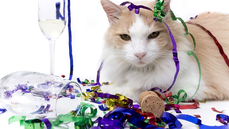 New Year's Eve is over and the only one left is the cat