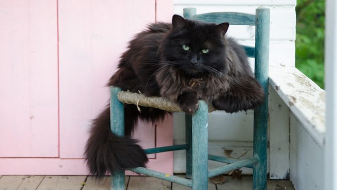 senior cat on old chair