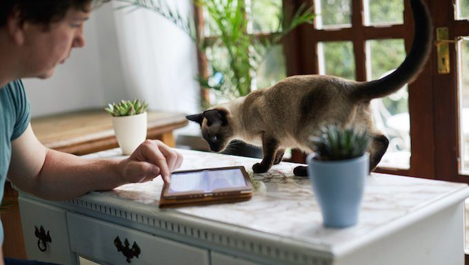 cat looks at tablet on counter
